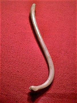 dimensiunea maximă a penisului cu erecție