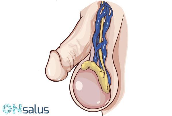 pe penis și testicule masaj pentru a spori erecția pentru bărbați