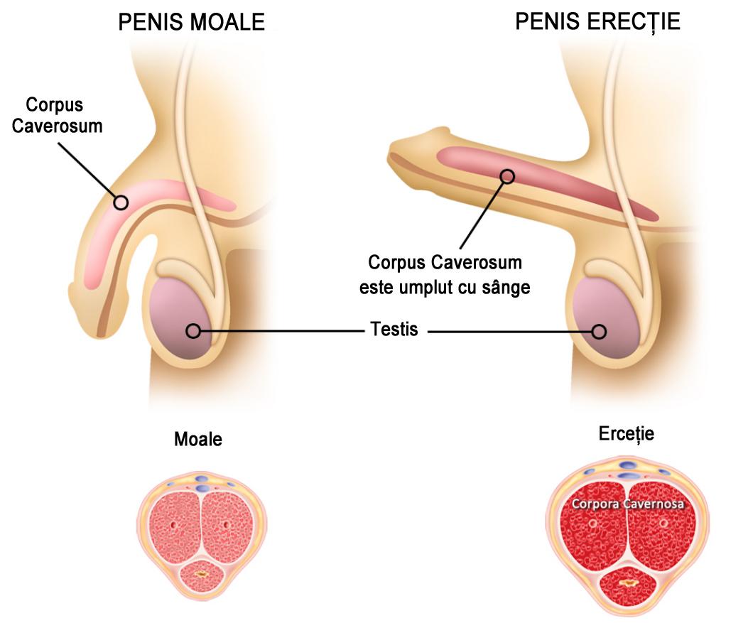 de ce este un penis moale cu erecție masaj de vid al penisului