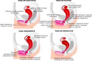 penisul se introduce în perineu