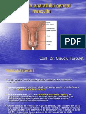 Dezvoltarea sistemului genital
