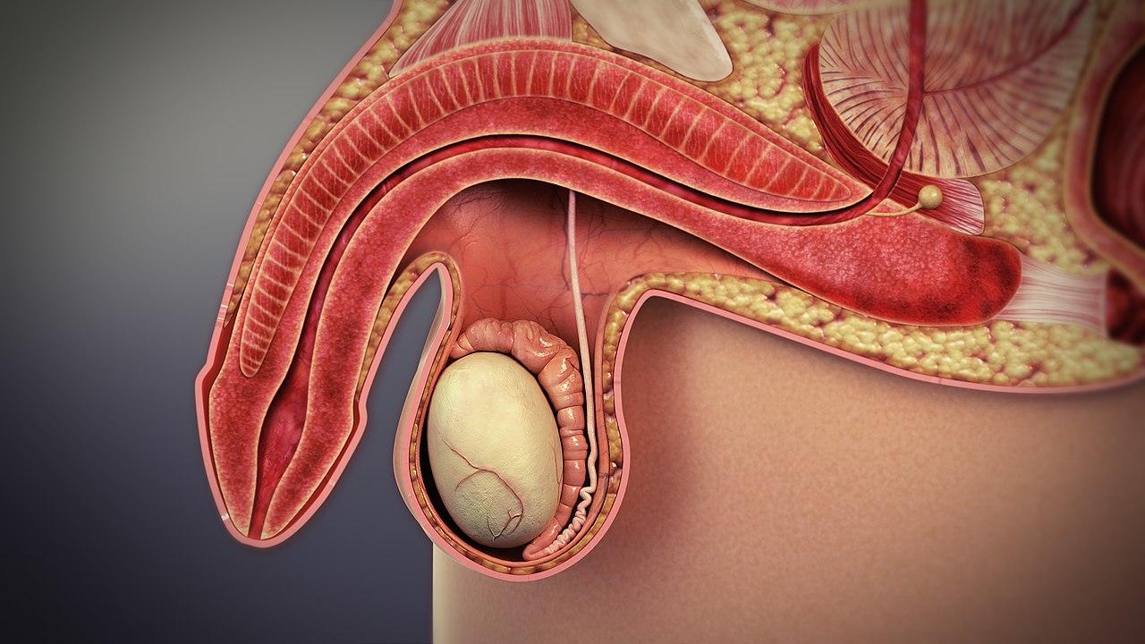 proctită și erecție erecția rapidă dispare