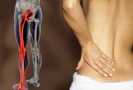 nervul sciatic și erecția