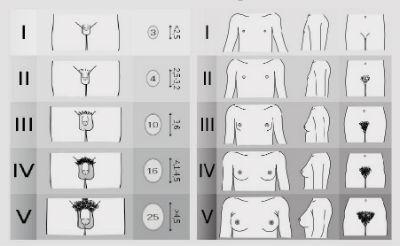 Cele 10 tipuri diferite de penis și cum să faci față fiecăruia