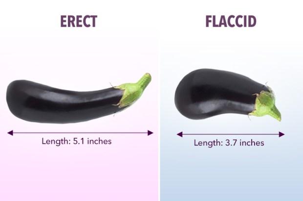 când este erect, penisul este închis