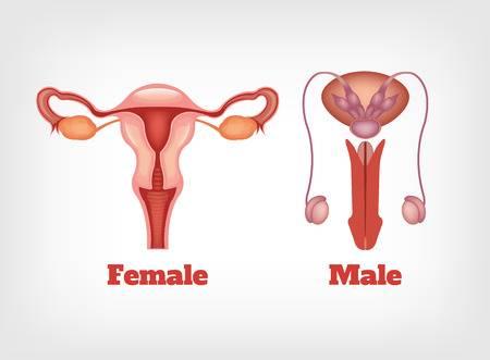 scăderea penisului erecție pierdută