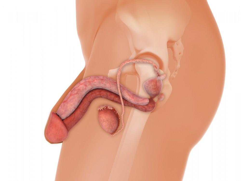 penis foarte sensibil ce trebuie făcut dacă penisul se sparge