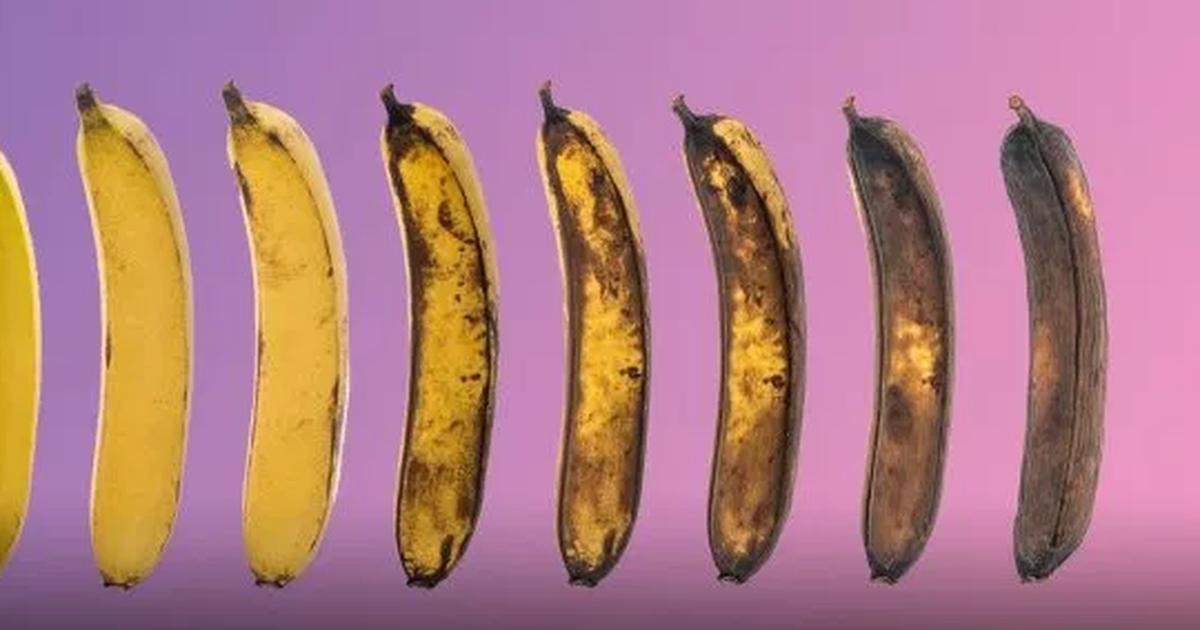cum să afli ce penis ai pregătirea erecției