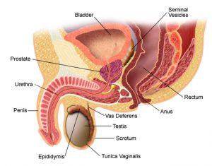Potență și prostată | trotusaeauto.ro