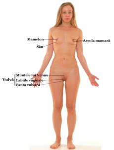 explicatie: de ce testiculele ies din scrot si intra spre abdomen? | Forumul Medical ROmedic